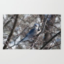 Winter blue jay in the sun Rug