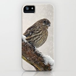 Facing the Storm (House Finch) iPhone Case