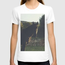 Wild stallion photo, black horse and italian sunset, original print for animal lovers, landscape T-shirt