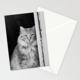 Doorway Cat 2 Stationery Cards