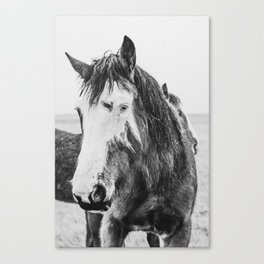 Blue Eyed Wild Horse 2 - Black and White Canvas Print