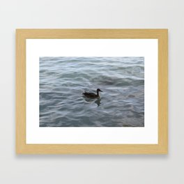 Duckling Framed Art Print