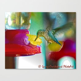 Hummingbird Photoart Canvas Print