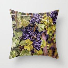 Newport Wine Vineyard and Grapes, Rhode Island Throw Pillow