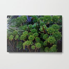 Succulent valley Metal Print
