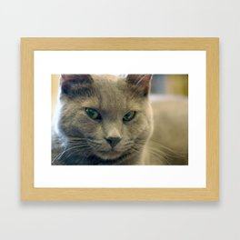 Hodge Contemplates Framed Art Print
