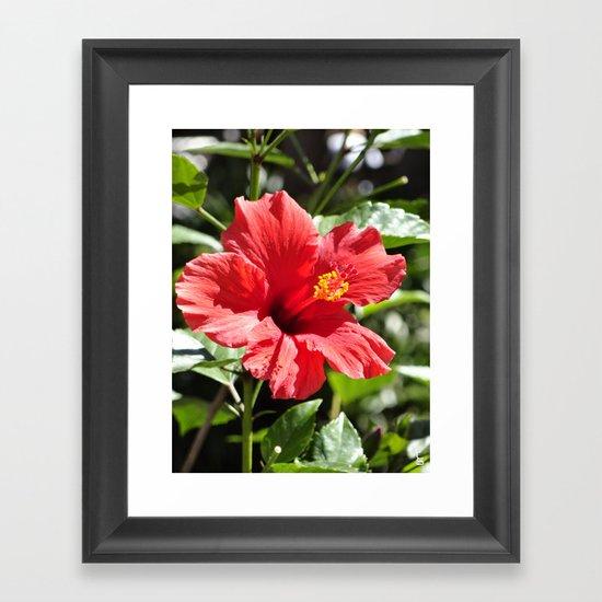 Hibiscus V Framed Art Print