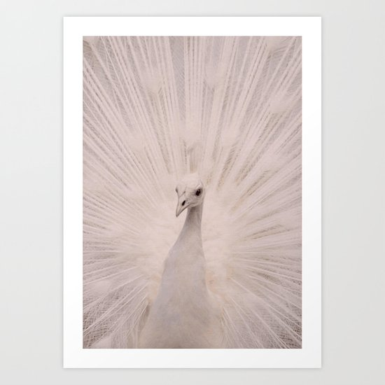 I'm a peacock, you got to let me fly! Art Print