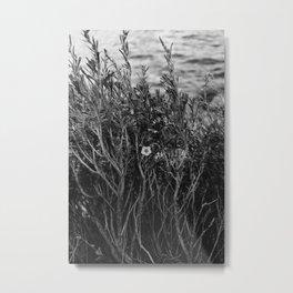 Tenaya Lake, Yosemite National Park II Metal Print