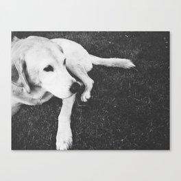 Dog Years Canvas Print