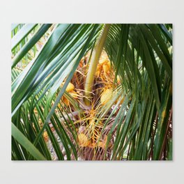 Pathway To The Coconut Canvas Print