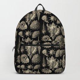 Ernst Haeckel Prosobranchia Sea Shells Backpack