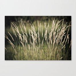 Summer-Grass Canvas Print