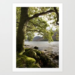 Oak tree on the shore of Buttermere with Haystacks beyond. Lake District, Cumbria, UK Art Print