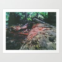 A Log Into The Forest Art Print