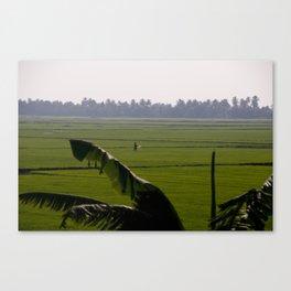 Rice Fields Canvas Print