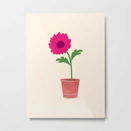 pink dahlia in the pot Metal Print
