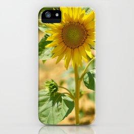 Cheerful sunflower iPhone Case