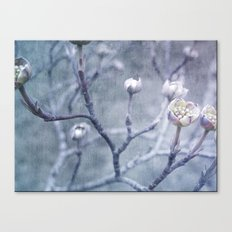 Spring buds Canvas Print