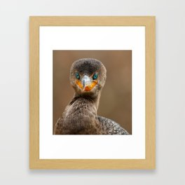 Direct eye contact with a cormorant Framed Art Print
