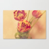 forever young Canvas Prints featuring Forever Young by Oh, Good Gracious!
