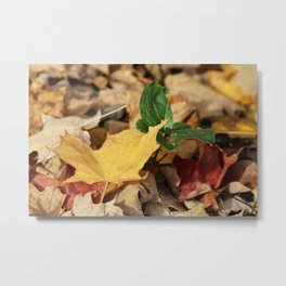 Autumn Leaf #3 Metal Print
