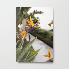 Birdcall Metal Print