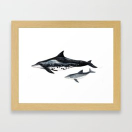 Rough-toothed dolphin (Steno bredanensis) Framed Art Print