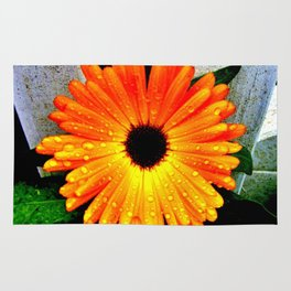 Orange Garden Marigold in the Evening Rug