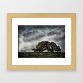 The Lone Oak Framed Art Print