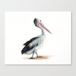 Pelican in Watercolour Canvas Print