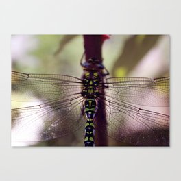 Wing Structure Canvas Print