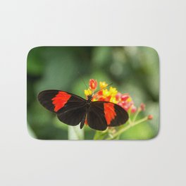 Beautiful buterfly, insect on green nature floral background, photographed at Schmetterlinghaus, But Bath Mat