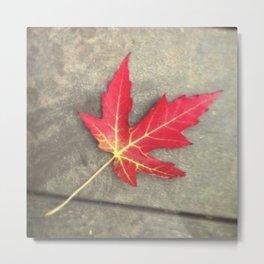Feuille d'érable - Maple leave Metal Print