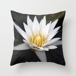 Longwood Gardens - Spring Series 37 Throw Pillow