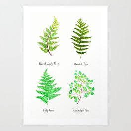 fern collection watercolor Art Print