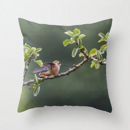 Rufous Hummingbird at Large, No. 2 Throw Pillow