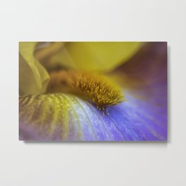 Iris Beard closeup Metal Print