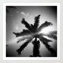 Palm Tree in Maui in Black and White Art Print