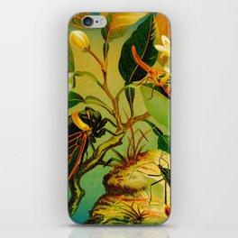 Vintage Cicada  iPhone Skin