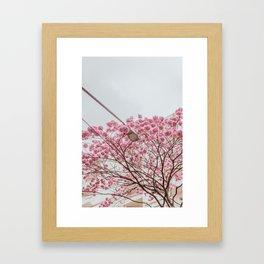 flower photography by Gláuber Sampaio Framed Art Print
