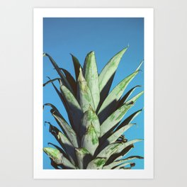 Pineapple Top Color Art Print