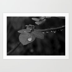 Tear Drop Black & White  Art Print