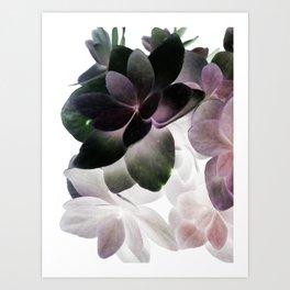 lavis Art Print