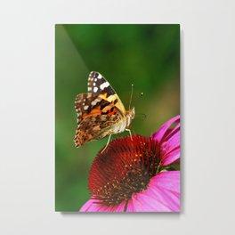 Butterfly macro 64 Metal Print