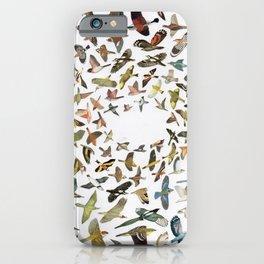 Bird, Birds, Birds iPhone Case