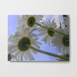 Fowers Daisy Days Metal Print