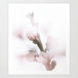 Foggy Peach Flowers Art Print