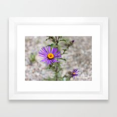 Purple Wild Flower Framed Art Print