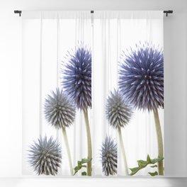 Echinops - Globe Thistles #1 #decor #art #society6 Blackout Curtain